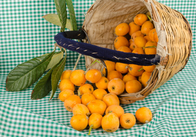 A traditional harvesting basket full of freshly picked loquats