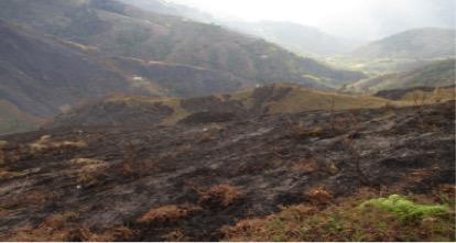 incendio forestal en genova sep 20 de 015