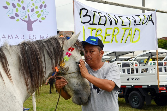 carretillero despide al caballo