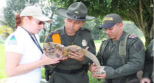 Perro de monte rescatado por carabineros en Manizales