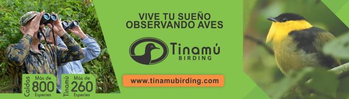 Tinamú - Marzo 2019