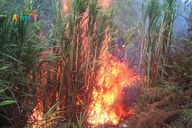 incendio forestal en armenia