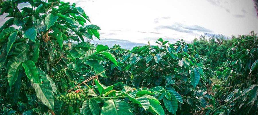Colombia modifica normas de exportación de café para mejorar ingreso de caficultores
