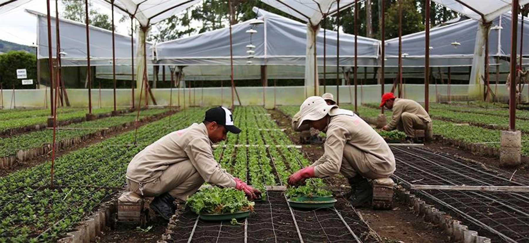 El campo y la vivienda se destacaron como generadores de empleo nacional en septiembre