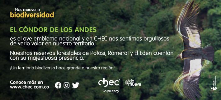 El cóndor de los Andes. Banner Chec.